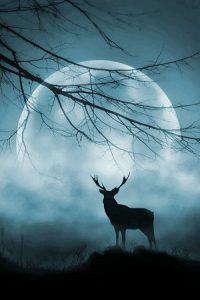 Blood & Bluegrass by Leland Lydecker